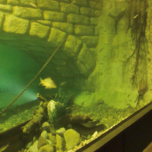 aquarium selber bauen und mit aquariensilikon abdichten